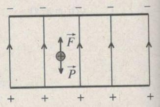 bai-56-trang-13-sbt-vat-li-11.jpg